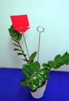 blompinnar2